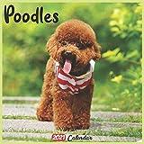 Poodles 2021 Calendar: Official Poodles Calendar 2021, 18 Months
