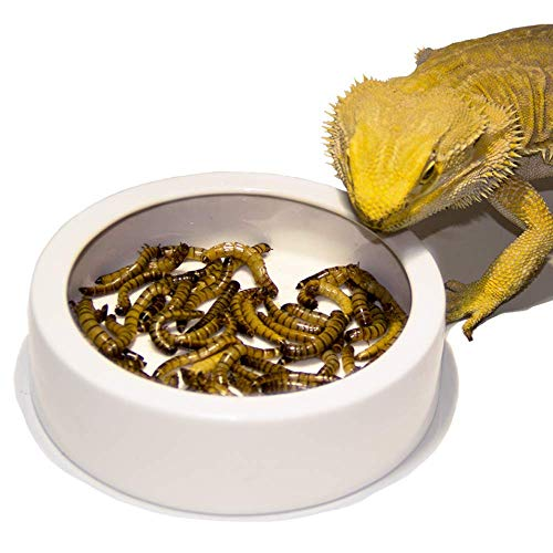 FireKylin Terrarium Bowls Reptile Food Bowl Worm Dish Mini Reptile Food Ceramics Water Bowl for Lizard Anoles Bearded Dragons Crested Gecko Hermit Crabs Triangular Leopard Gecko Chameleon (M)