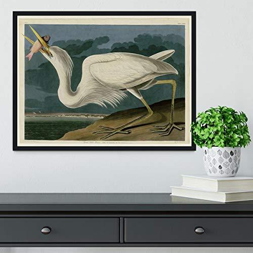 Audubon Great White Heron - Lámina enmarcada, Madera, 24in x 16in | Black Frame No Border