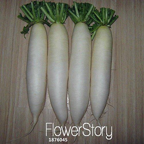 Big Sonderaktion. Obst weißen Radieschen-Samen Samen Kokosnuss zu© gà © Tales Biologische Samen E ¶ gumes Strahlen Lange 60Stück/Pack,
