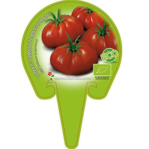 Plantón ecológico de Tomate Raf maceta 10,5 cm de diámetr