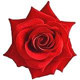 【カラー各種】薔薇のフラワーコサージュ ヘアコサージュ 髪飾り ヘアアクセサリー 収納ケース付 (レッド(1個))