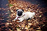 Jigsaw Puzzle 500 Pieces Pug in The Fallen Leaves Adults Children Wooden Puzzle Leisure Creative Games Toys Puzzles
