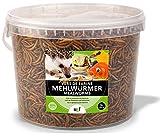 UGF - Premium Mehlwürmer getrocknet, Insekten Snacks für Vögel, Hamster, Igel, Nager, Eidechsen, Schildkröten – ohne Konservierungsmittel und Farbstoff (3 Liter)