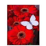Pintura de flores rojas por número Cuadro al óleo sobre lienzo Color hecho a mano para adultos Pintura para dibujar Kit de bricolaje Decoración del hogar Arte de la pared (Sin marco)