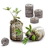 Danolt 36 Pezzi dischetti di Torba per germinazione - Il Terreno compresso Si espande con ...