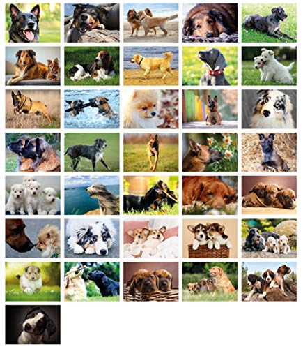 Clever Pool: 36 einfallsreiche Postkarten mit einzigartigen Hundemotiven | ausgewählte Designs und Motive | Sammelspaß für Jung und Alt | ein Postcrossing Set zum Verlieben