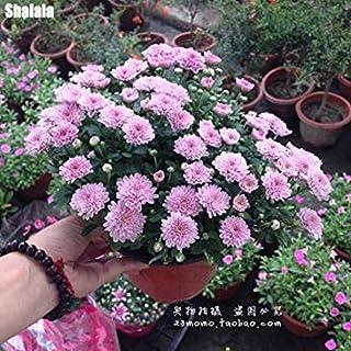 4:farmerlyでは4を成長させるための150pcs /バッグレア花アウトドアブルーミングハーディ盆栽鉢植えのネイチャーシード簡単