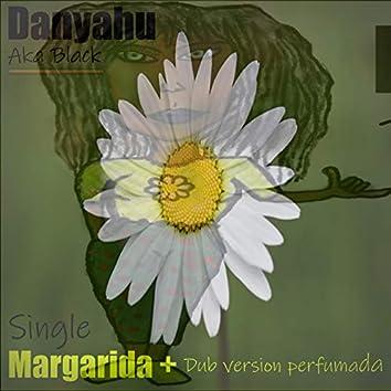 Margarida dub perfumada