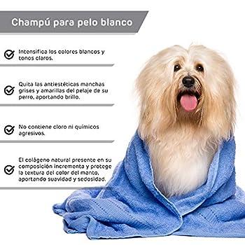 RC ocio Shampoing Chien Aloe Vera/Shampoing Naturel Peau Sensible/Shampoing Chien-Chiot Anti Demangeaison/Shampooing Chien Poil Court et Poils Longs/Shampoing Chien Poil Blanc, Noir (Poil Blanc)