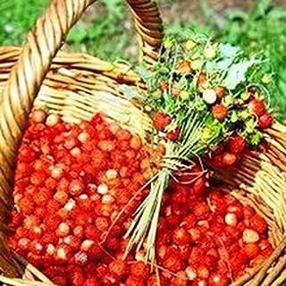Amazon.es: Flores Frescas Online - Jardinería: Jardín