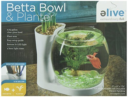 Betta Bowl And Planter by Elive, Llc.