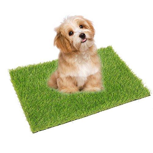 grass versus wee wee pads