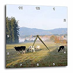3D Rose Canada - Vancouver Island. Cows grazing on Grass at a Dairy Farm Wall Clock, 15 x 15