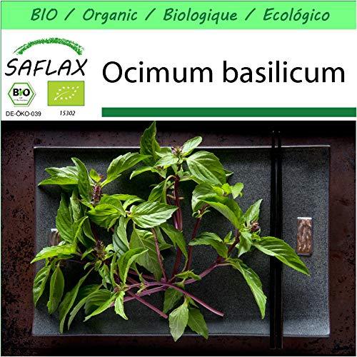 SAFLAX - Jardin dans la boîte - BIO - Basilic - Thaï - 250 graines - Avec pot en argile, support, substrat de culture et engrais - Ocimum basilicum