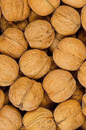 pianta di Noce albero di noce Comune Età 2 anni già innestato pianta da frutto di noci in vaso pianta vera di noci venduta da eGarden.store
