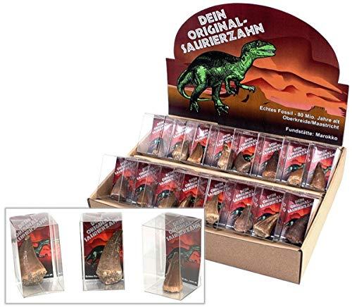 IMAGO Saurierzahn, originales Fossil zum sammeln, Saurier Zahn
