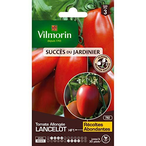Vilmorin - Sachet graines Tomate Allongée Lancelot HF1