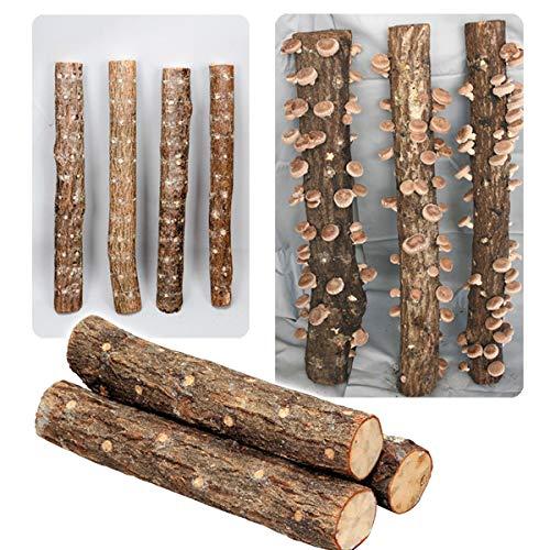 国華園 有用植物苗 しいたけ 完熟ホダ木 ホダキングしいたけ 45cm 1本 /21年秋商品