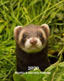 2020 Weekly and Monthly Planner: Ferret - Monthly Calendar with U.S./UK/ Canadian/Christian/Jewish/Muslim Holidays– Calendar in Review/Notes 8 x 10 in.-Wildlife Animal  Nature