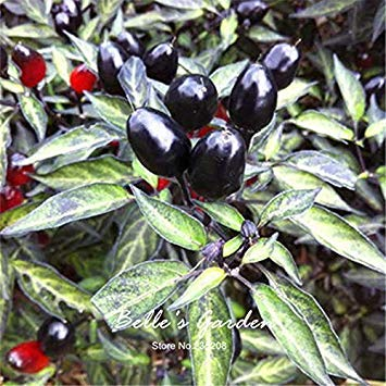 Vista 30 stücke Schwarz Olive Zierpfeffer Samen Interessante Pfeffer Cayenne Pfeffer Hausgarten Bonsai Pflanze DIY # Q31