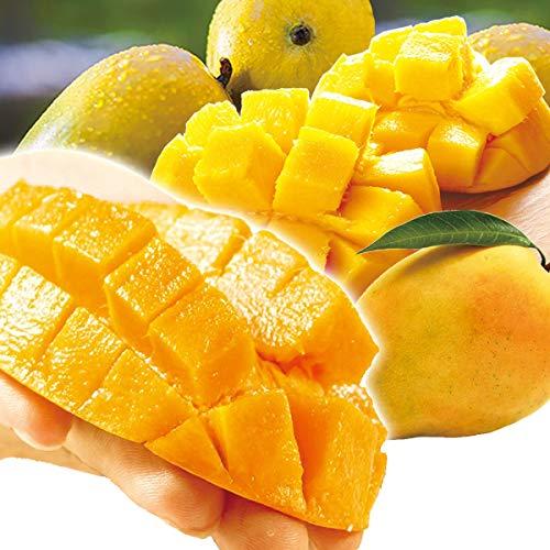 国華園 インド産 極楽マンゴー 1�s 1箱 マンゴー 南国フルーツ