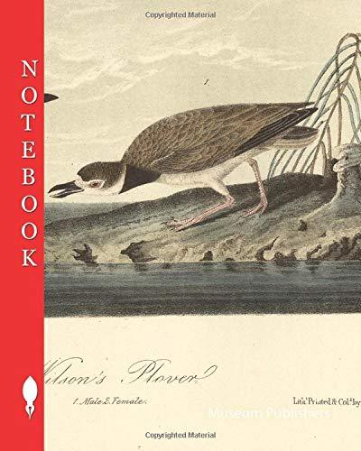Wilson's Plover, Wilson's Plover (Charadrius wilsonia), Signed: J.J. Audubon, J.T. Bowen, lithograph, Pl. 319 (Bd. 5), Audubon, John James (drawn); ... James Audubon: The birds of America: Notebook