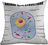 DKISEE Standard Pillow Cases Educational, Microbiology Theme Animal Cell Structure Genetic Research School Study Science, For Home Sofas, Bedrooms, Offices, and More 24x24 Inch