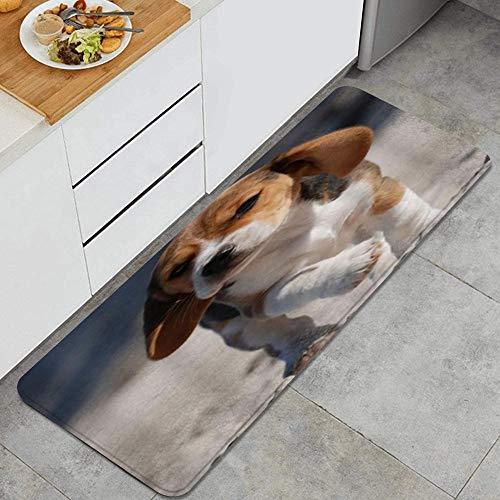 ZORMIEY Alfombras Cocina Lavable Antideslizante Alfombrilla de Goma Alfombra de Baño Alfombrillas Cocina 45x120cm,Pequeño Paseo de Perro Beagle en la Playa
