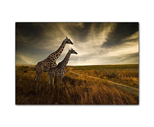 PB Art - Tierbild Giraffen 80 x 120 cm als Kunstdruck auf Leinwand und Holzkeilrahmen - Beste Qualität, handgefertigt in Deutschland!