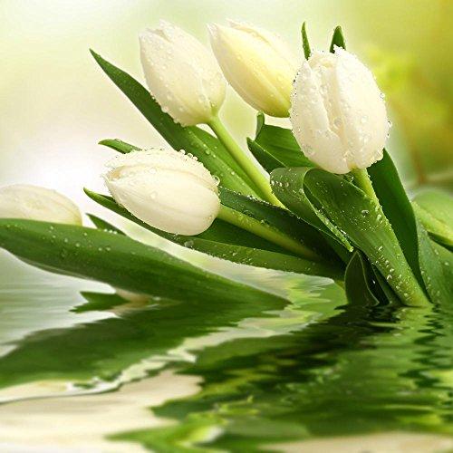 KAYI Blanc Coloré Tulip Fleur Graines Accueil Intérieur Chambre Bonsaï Plante En Pot Facile à Cultiver