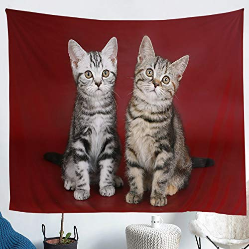 Erosebridal Gray Cat Tapestry Double Cats Tapestries for Kids Boys Girls Cute Brown Kitten Wall Hangings Large 59x82 Pet Animal Throw Blanket Red Ultra Soft Decorative Room