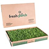 Fresh Patch Standard - Real Grass Pee and Potty Training Pad for Dogs Under 15 Pounds - Indoor and Outdoor Use - 16 Inches x 24 Inches