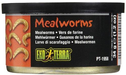 Exoterra Aliment Vers de Farine pour Reptiles et Amphibiens 34 g