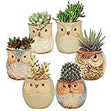 Succulents Flowerpots, set di 6 mini vasi da fiori, bonsai Plant Pots, vasi per piante grasse, mini gufi, vasini in ceramica, cemento, mini vaso per piante in miniatura