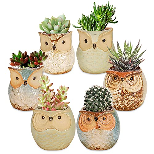 Succulents Flowerpots - Juego de 6 mini macetas, bonsái plant Pots, maceteros suculentas, búhos, mini búhos, maceteros de cerámica y hormigón, mini macetas para cactus en miniatura