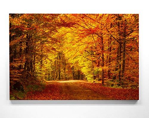 Atemberaubendes Herbst-Panorama-Bild - Goldener Waldweg - als 110x50cm großes XXL Leinwandbild. Wandbild als Hintergrund und Deko für Wohnzimmer & Schlafzimmer. Aufgespannt auf Holzrahmen