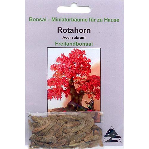 Tropica Lot de 20 graines de bonsaï érable rouge (Acer rubrum)