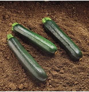 Raven Dark Summer Zucchini Squash (F1) 15 seeds