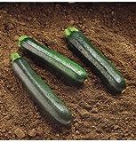 Raven scuro Estate Zucchini Squash (F1) 15 semi