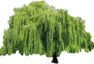Best willow oak seeds Reviews