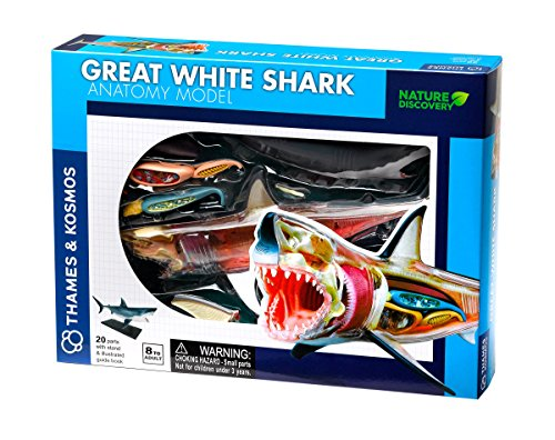 Thames & Kosmos Thames and Kosmos 261110 White Shark Anatomy, 20 Stand and Illustrated Guide Book, Nature Discovery Range, Detachable Parts, 3D Models, Ages 8 to Adult, Multi