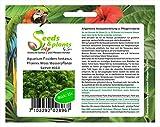 *Stk - 15x Aquarium Fissidens fontanus Phoenix Moos Pflanzen - Samen #313 - Seeds Plants Shop Samenbank Pfullingen Patrik Ipsa