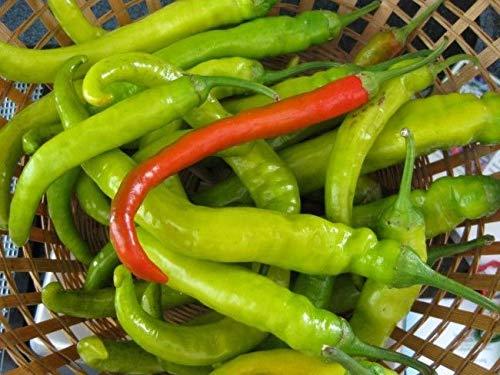 Portal Cool Mehmet süße Türkisch Pfeffer 10+ Seeds