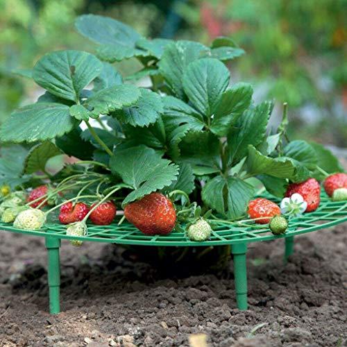 Hukz 5 Stück Erdbeeren-Reifer, Strawberry Plant Growing Supports, Erdbeerreifer Unterstützt für Erdbeeren Salat und Tomaten, Schneckenschutz und Schutz vor Fäulnis und Schimmel (Grün)