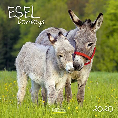Esel 2020: Broschürenkalender mit Ferienterminen und Bildern von süßen Eseln. 30 x 30 cm