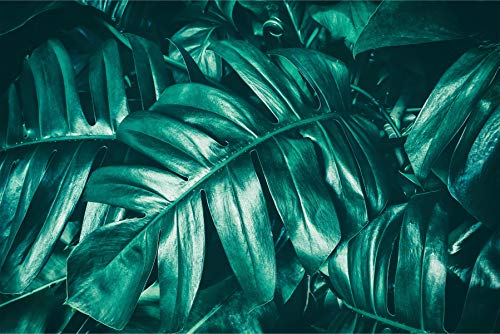 Muralo Selbstklebende Fototapete 315 x 210 Monstera Blätter Natur Tapete Pflanzen Flora Dschungel Exotik Wohnzimmer Schlafzimmer Wandbilder XXL Wand Br. 315 cm x Hö. 210 cm