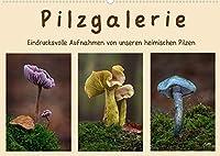 Pilzgalerie - Eindrucksvolle Aufnahmen von unseren heimischen Pilzen (Wandkalender 2022 DIN A2 quer): Einzigartige Pilzaufnahmen wie man sie nur selten sieht (Monatskalender, 14 Seiten )