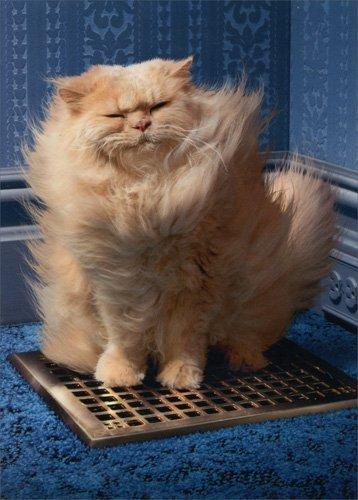 Cat Over Grate - Avanti Funny Just for Fun Card