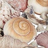 Relaxdays Muschel Deko Mix, Set mit Meeresschnecken, Dekomuscheln, echte Stranddeko zum Basteln, Badezimmer, 500 g, bunt - 7